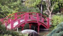 Jardin japonais - Toulouse