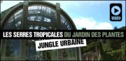 LES SERRES TROPICALES DU JARDIN DES PLANTES